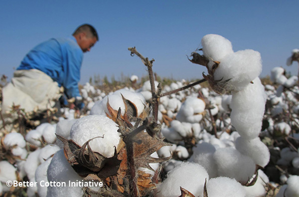 For sustainable cotton production